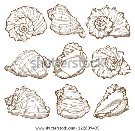 Ocean Shells Drawing Hand Drawing Seashell Seamless