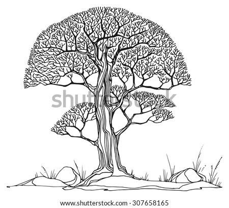 Hand drawing sketch of tree, vector illustration - stock vector