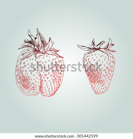 Hand drawing strawberry (lines) - stock vector