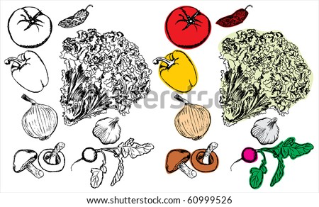 Hand drawing vegetables collection - stock vector