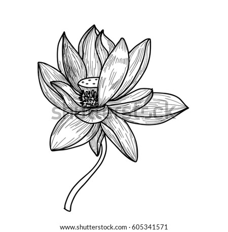 Hand drawn sketch lotus flower stock vector 605341571 shutterstock hand drawn and sketch lotus flower mightylinksfo