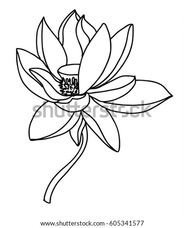 Hand drawn sketch lotus flower stock vector hd royalty free hand drawn and sketch lotus flower mightylinksfo