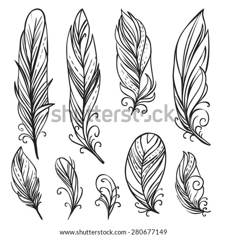 Hand drawn bird feathers. Vector set - stock vector