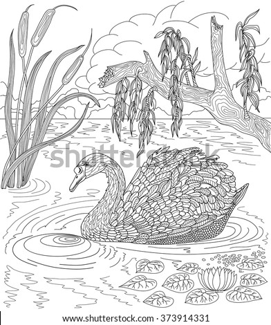 Hand drawn bird - Swan swimming in a lake with reeds and water lilies. Coloring page.  - stock vector
