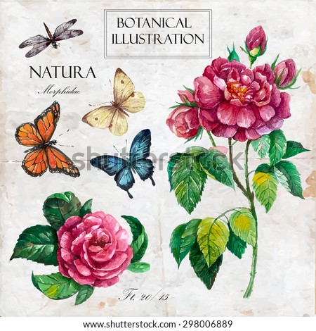 Hand drawn botanical illustration in vintage style.Vector set of watercolor hand drawn roses, butterflies, dragonfly Isolated on vintage background  with letters and text. - stock vector