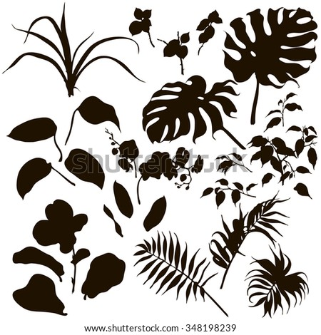 Hand drawn branches and leaves of tropical plants. Set of  black silhouettes on white background. - stock vector