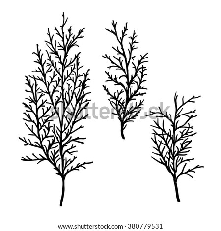 Hand drawn branches. Floral elements. Vector illustration. - stock vector