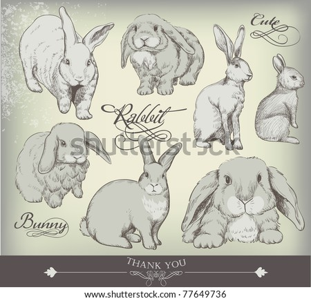 hand-drawn bunny collection - high quality - stock vector