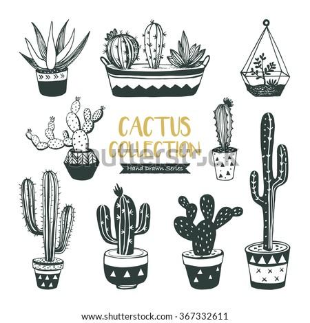 Hand drawn cacti collection (vector design) - stock vector