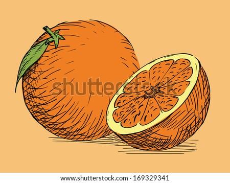 hand drawn citrus orange, trropical fruit - stock vector