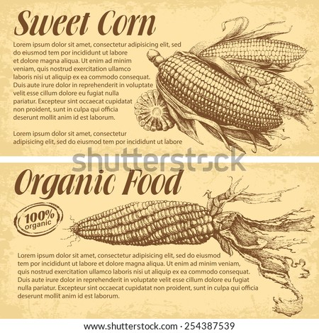 Hand drawn corn. Vector banners with space for your text