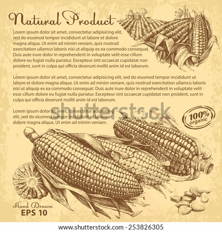 Hand drawn corn. Vector design with copy-paste space