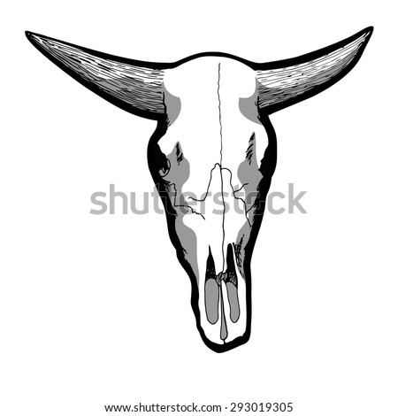 Hand-drawn cow skull isolated on white, vector illustration.