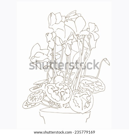 Hand drawn cyclamen flowers in a pot. Vector illustration. - stock vector