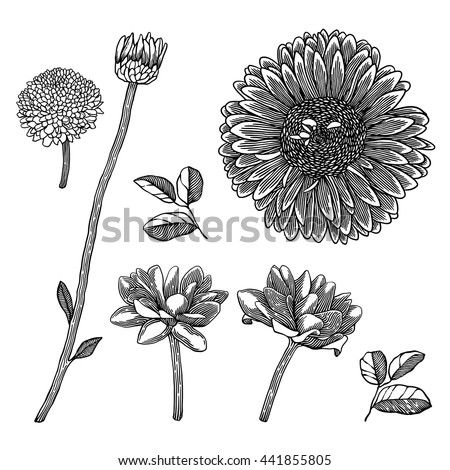 Hand drawn decorative flowers isolated on white. Ink drawing flow