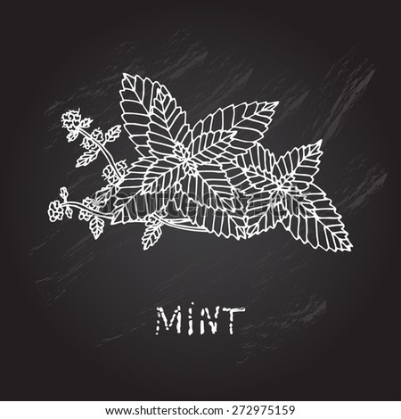 Hand drawn decorative mint, design element. Can be used for cards, invitations, gift wrap, print, scrapbooking. Kitchen theme. Chalkboard background. Herbs and spices sketch - stock vector