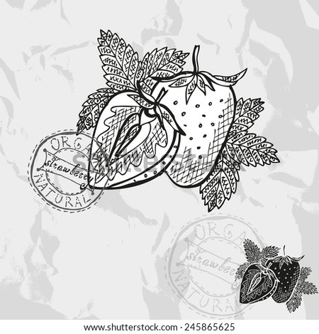 Hand drawn decorative strawberries, design elements. Citrus collection. Can be used for cards, invitations, gift wrap, print, scrapbooking. Kitchen theme - stock vector