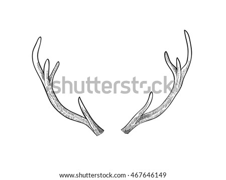 Hand drawn deer horns, or antlers isolated  on white background. Art vector illustration