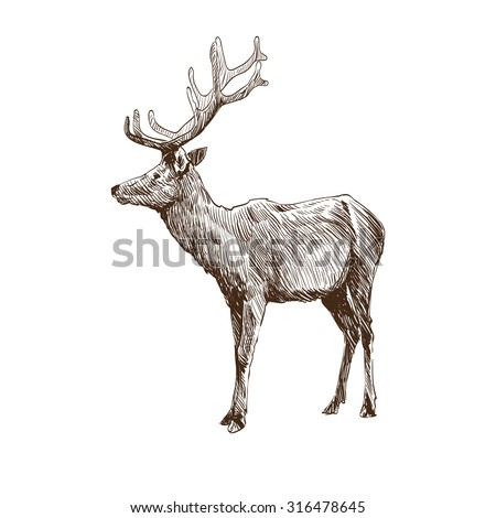 Hand drawn deer isolated on a white backgrounds. Design element. Vector illustration