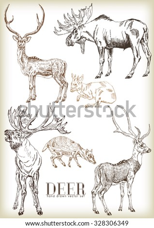 Hand drawn deer vector set - stock vector