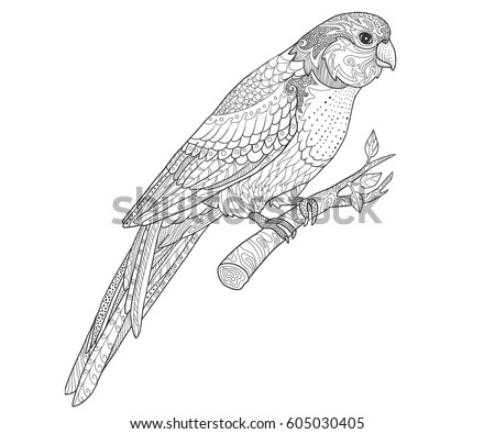 Hand Drawn Doodle Parrot Page For Adult Coloring Book Tropical Bird Vector Illustration