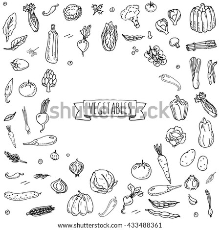 Hand drawn doodle vegetables icons set. Vector illustration seasonal harvest symbol collection Cartoon different kinds of fresh food Various type of vegan nutrition isolated on white background Sketch - stock vector