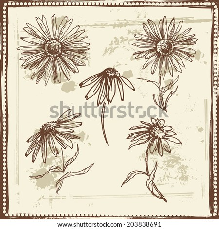 Hand drawn elegance sketch of  daisies. Vintage botanical elements. All objects are conveniently grouped on different layers and are easily editable