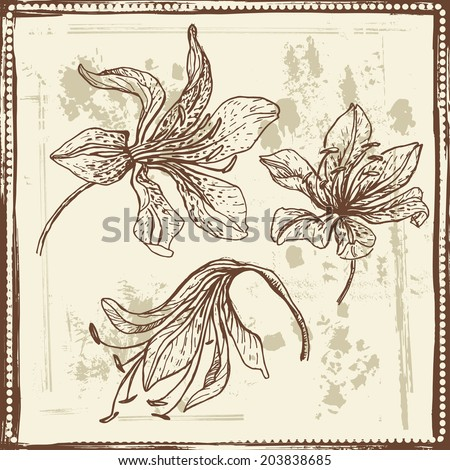 Hand drawn elegance sketch of lilies. Vintage botanical elements. All objects are conveniently grouped on different layers and are easily editable - stock vector