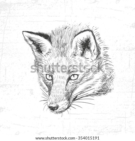 Hand drawn fox, vector illustration. See also other sets of animals. - stock vector