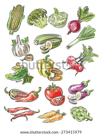 hand drawn fresh color vegetables on white - stock vector