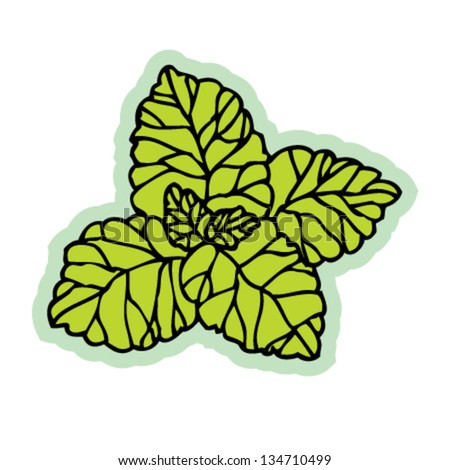 Hand drawn fresh mint leaf vector on white background. - stock vector