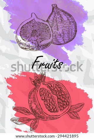 Hand drawn fruit. Fig and pomegranate fruits vector illustration. Eco food background - stock vector