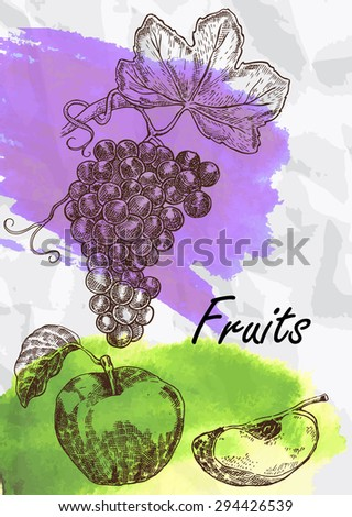 Hand drawn fruit. Grape and apple fruits vector illustration. Eco food - stock vector