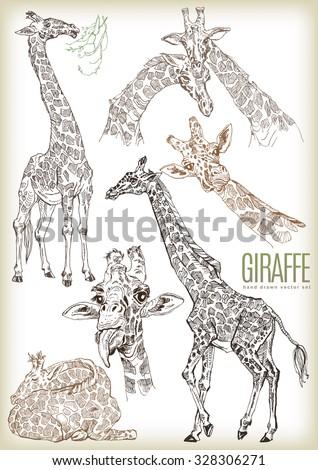 Hand drawn giraffe vector set - stock vector