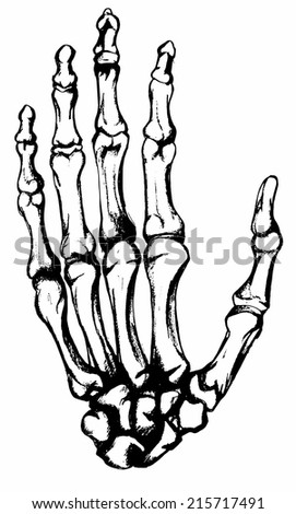 Hand drawn hand bones - stock vector