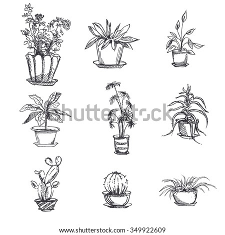 House Plant Identification By Leaf leafy house plants identification plant leaves identification