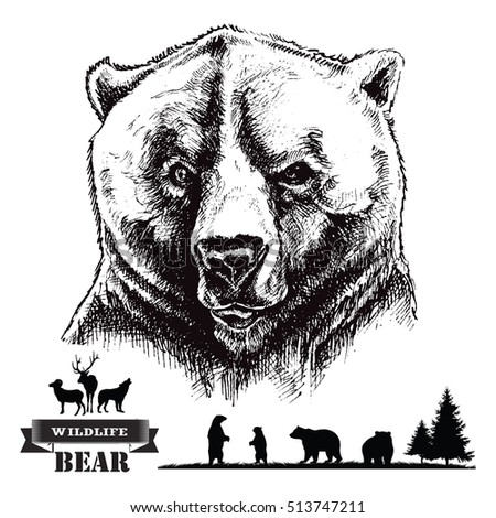 Hand drawn illustration. Bear