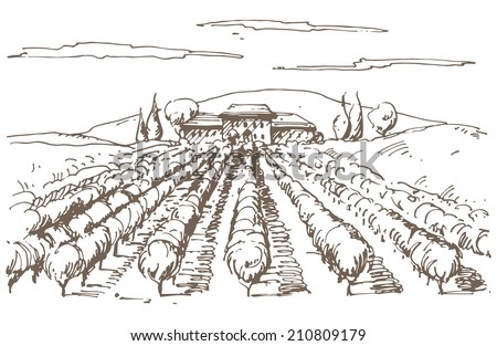 Hand drawn illustration of a vineyard. EPS 10. No transparency. No gradients.