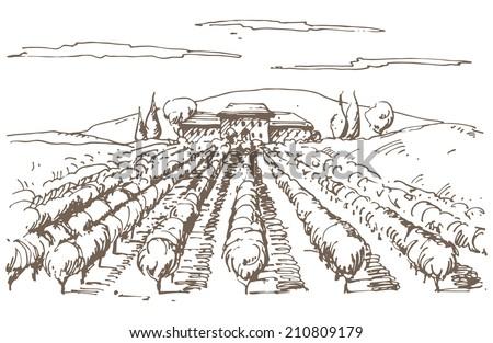 Hand drawn illustration of a vineyard. EPS 10. No transparency. No gradients. - stock vector