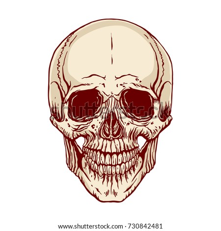 Hand Drawn Illustration Anatomy Human Skull Stock Vector 730842481 ...
