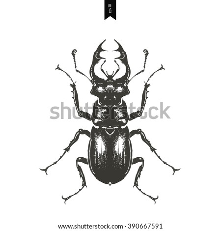Hand drawn illustration of beetle on a wight background. vector illustration - stock vector