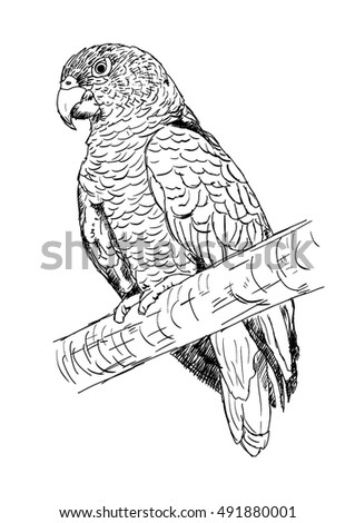 hand drawn illustration of parrot. abstract sketch of bird. vector isolated