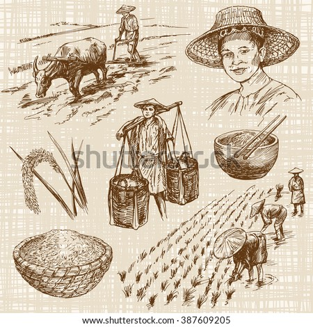 Hand drawn illustration, rice harvest - stock vector
