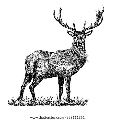 Deer illustration black and white - photo#13