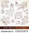 Hand-drawn leaves doodles set - stock vector