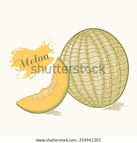Hand drawn melon with slice vector illustration - stock vector