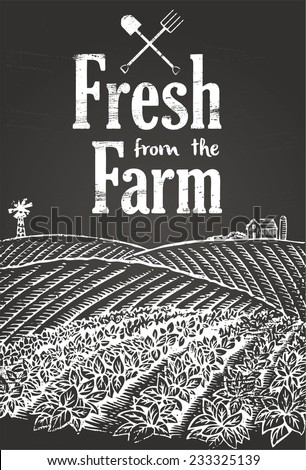 Hand drawn of vegetables farming on chalkboard with text fresh from the farm - stock vector