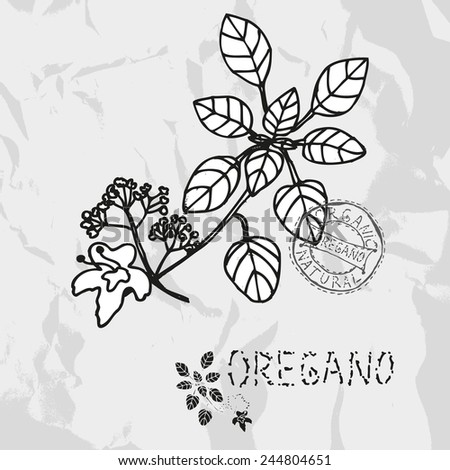 Hand drawn oregano plant with flowers, design elements. Culinary spices. Can be used for cards, invitations, gift wrap, print, scrapbooking. Kitchen theme - stock vector