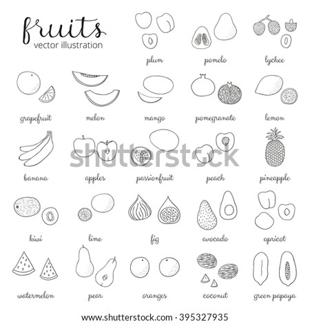 Hand drawn outline fruits isolated on white. Pineapple, kiwi, apple, grapefruit, banana, lemon, blackcurrant, papaya, peach, lime, passionfruit, lychee, plum, apricot, watermelon, avocado, coconut. - stock vector
