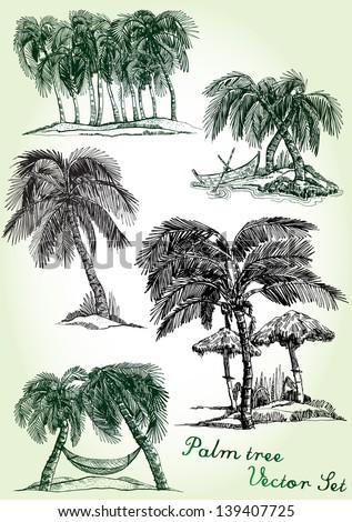 hand drawn palm tree vector set - stock vector